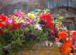 """Pěstování rostlin v """"samozavlažovácích"""""""